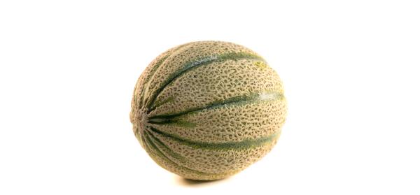 melone-retato