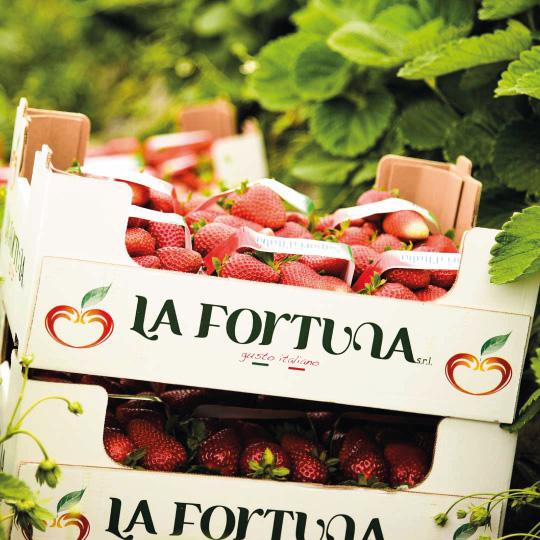 la-fortuna-group-gusto-italiano